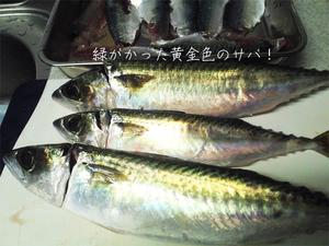 ooita-sekisaba-turi12.jpg