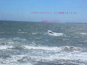 yokosukashi-nobi-s-tochi4.jpg