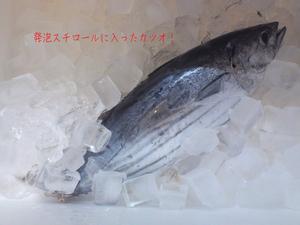 湘南の海の幸|旬の地魚プレゼント?