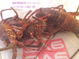 miurashi-hasseimachi-a-jyoutou3.jpg