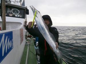 東京湾内観音崎沖にてタチウオ釣り|イルカと遭遇