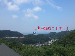 hayama-nagae-k-tochisagashi2.jpg