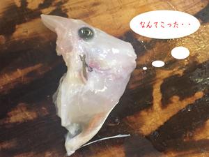kawahagi-kimoae-sabakikata19.jpg