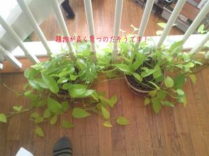 aichi-chiryuheater-jikken-house-shisatsu8.jpg
