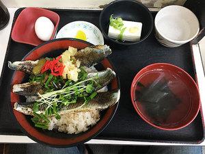 zushi-kotsubo-yuuki-shokudou-katsuo-aburidon3.jpg