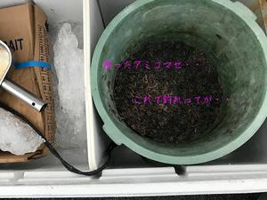 okinawa-ishigaki-maguro-tsuri6.jpg