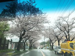 過去に建てたオーナーが集まる建築設計事務所+工務店|春の桜並木が綺麗です☆