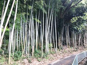 yokosuka-yrp-uchikura15.jpg