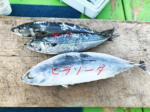 hayama-hukaba-gomoku-tsuri6.jpg