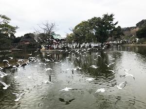 kamakura-hachimanguu-2018-4.jpg