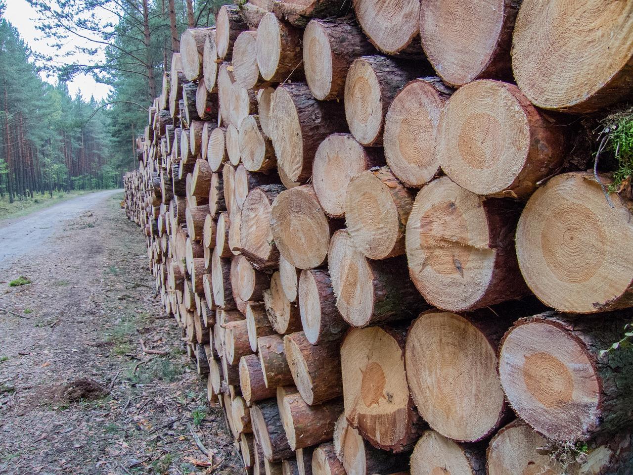 なぜ杉などの無垢材に興味を持つ人が多いのか