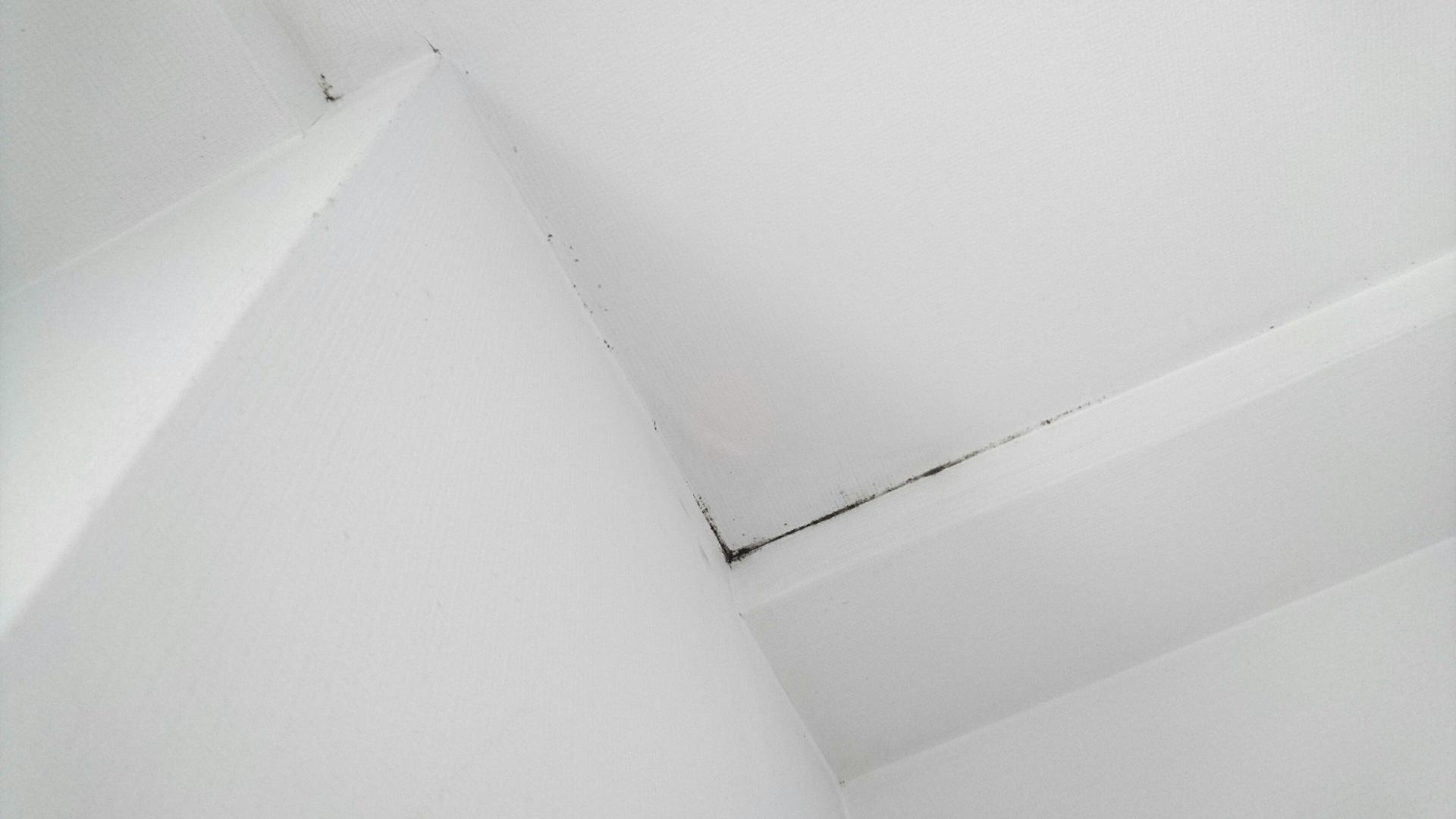 室内の漆喰や珪藻土に発生するカビ(家の中心部の場合)
