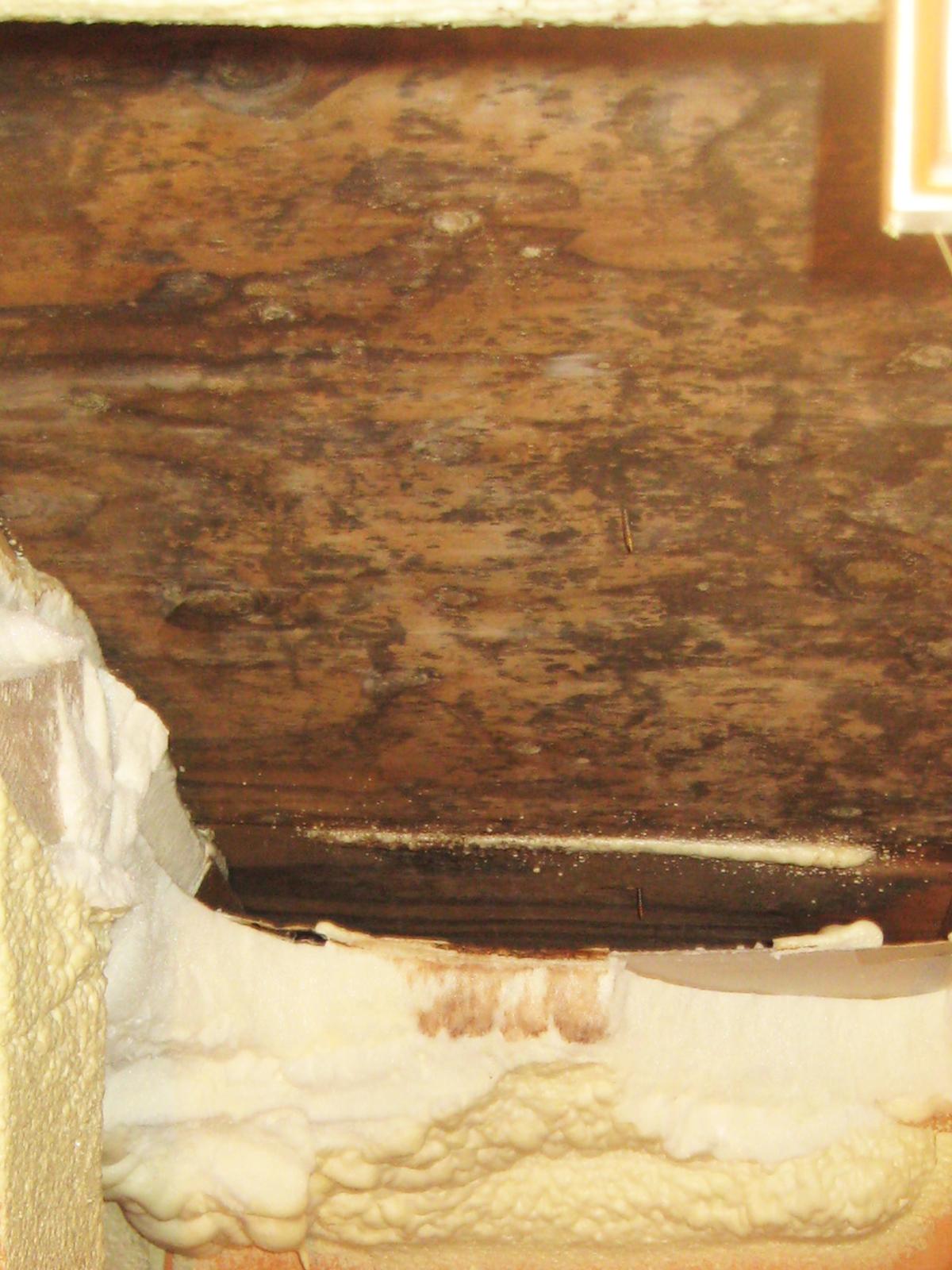 室内の漆喰や珪藻土に発生するカビ(家の外壁部分の場合)