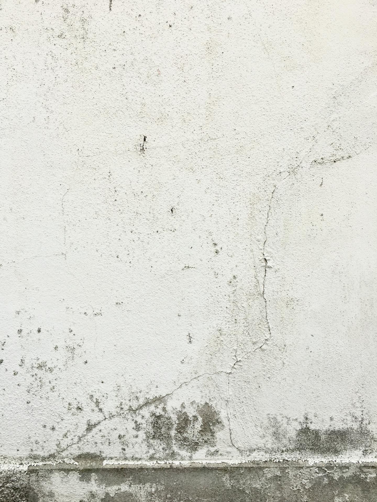家の漆喰外壁に発生するカビ